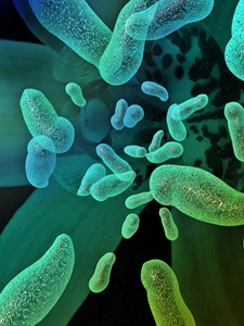 Rates of Salmonella and Campylobacter have increased, according to research.